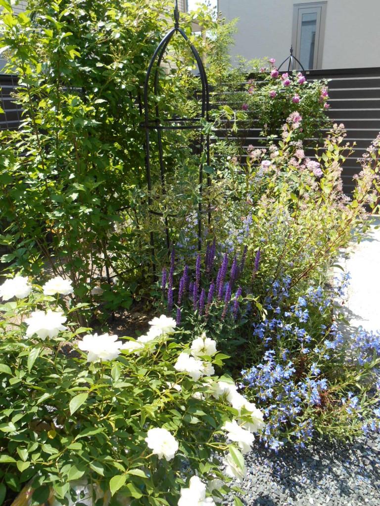 つるバラ 宿根草 庭づくり