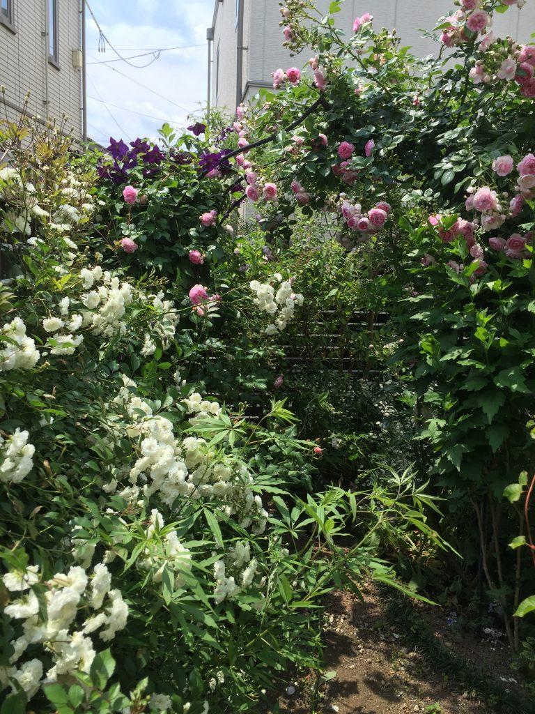 バラ アーチ 庭