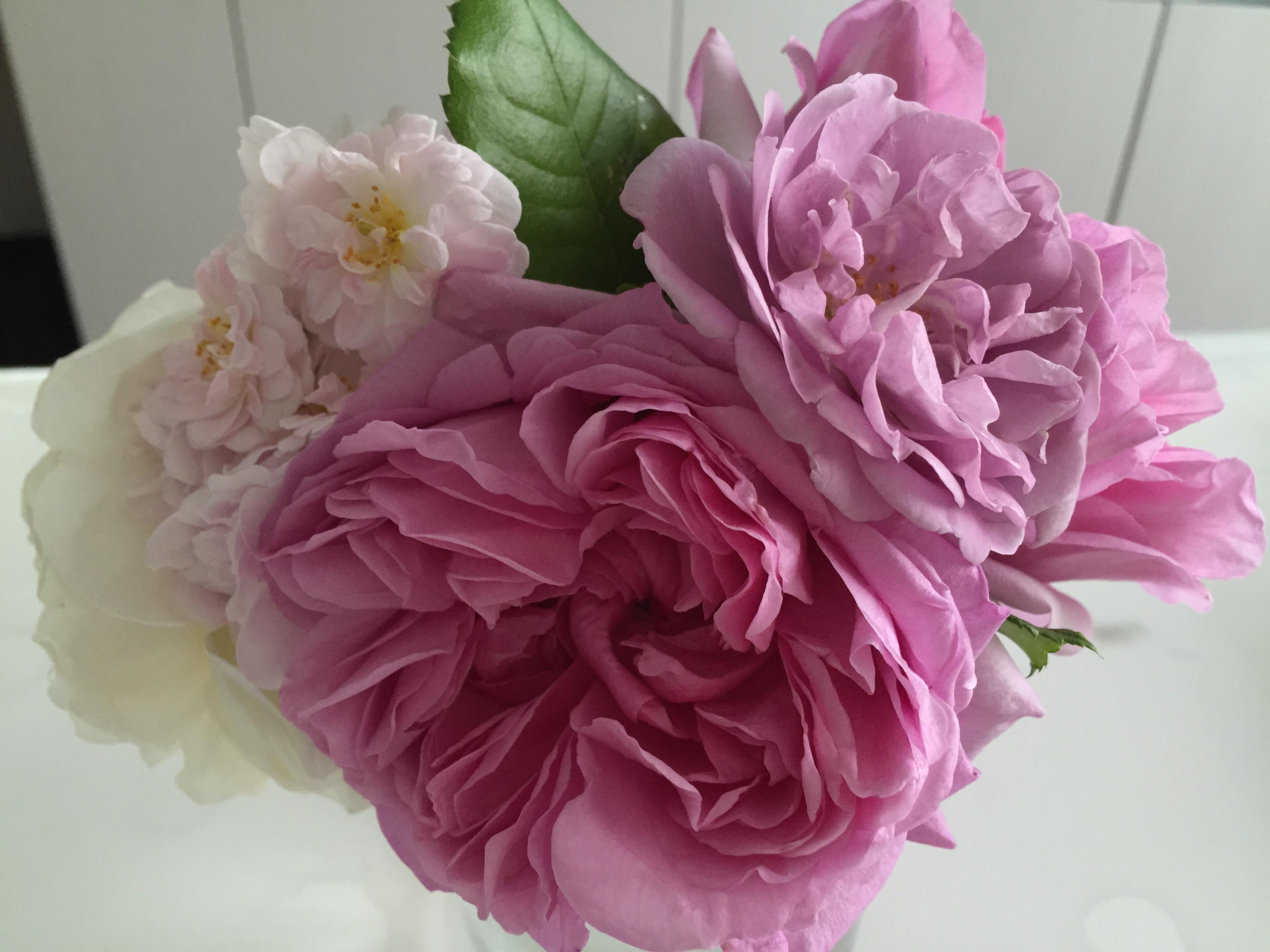 台風の通過後、バラの手入れはどうする?塩害に注意!